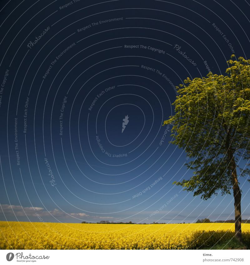azzurro Agriculture Forestry Environment Nature Landscape Sky Spring Beautiful weather Plant Tree Agricultural crop Canola Canola field Oilseed rape cultivation