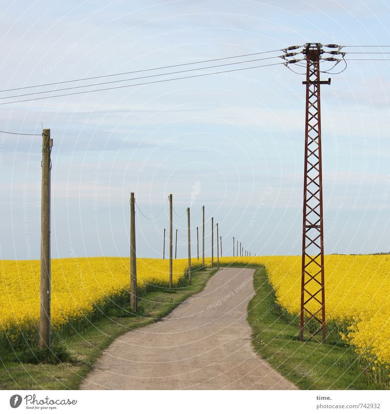 The end consumer is happy about this Agriculture Forestry Energy industry Technology Electricity pylon High voltage power line Environment Nature Landscape