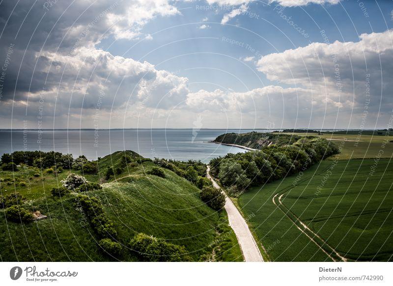 coastal line Landscape Sky Clouds Storm clouds Sun Sunlight Tree Bushes Field Coast Baltic Sea Blue Green White Mecklenburg-Western Pomerania Rügen