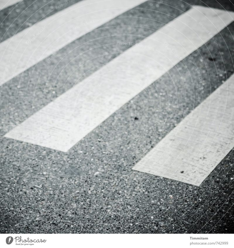 White Street Dye Emotions Gray Line Signs and labeling Wait Simple Asphalt Trashy Patient Zebra crossing