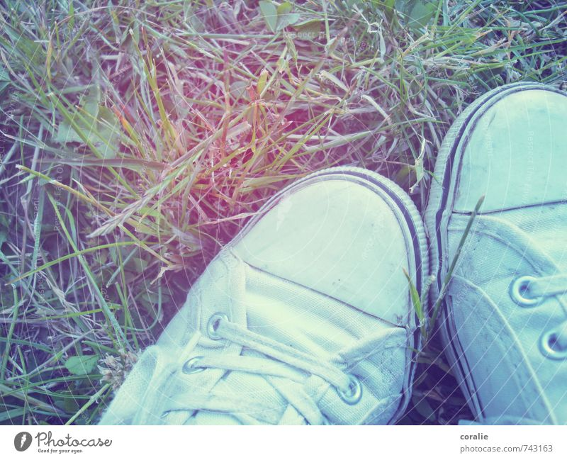 festival summer Summer Grass Meadow Footwear Sneakers Chucks Shoelace Lawn Relaxation Music festival Retro Park 2 Together Grass meadow Rocking Calm Cuddling
