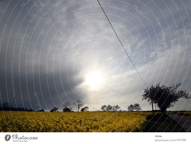 After the rain Energy industry High voltage power line Environment Nature Landscape Sky Clouds Horizon Beautiful weather Plant Tree Agricultural crop