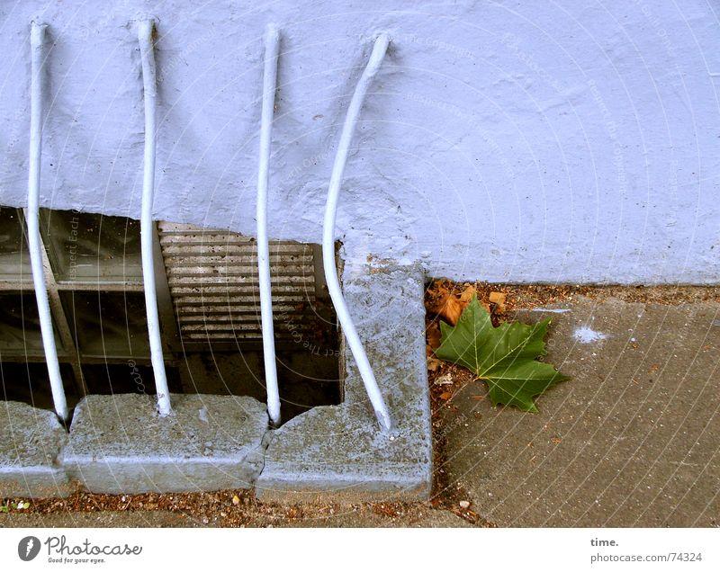 Blue Leaf Wall (building) Autumn Wall (barrier) Handrail Iron Grating Backyard Cellar Landing