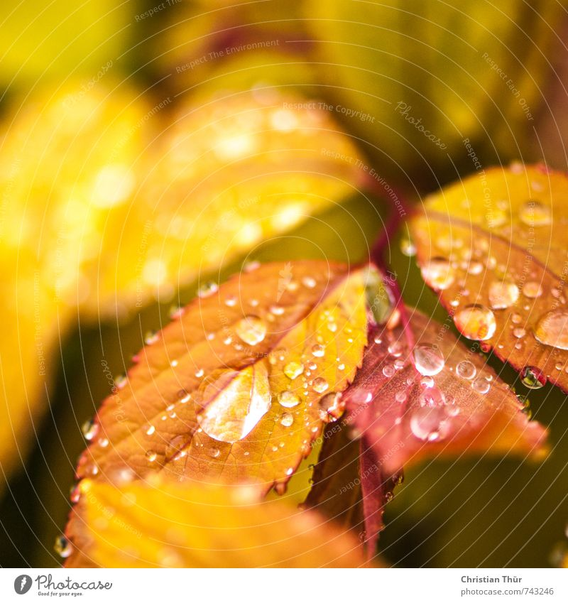 Nature White Water Plant Red Leaf Animal Yellow Environment Autumn Spring Brown Moody Rain Field Gold
