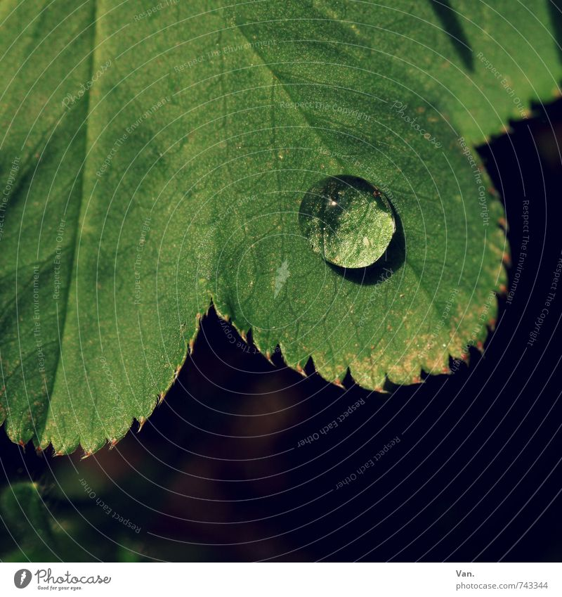 Nature Green Plant Leaf Small Garden Fresh Wet Drops of water
