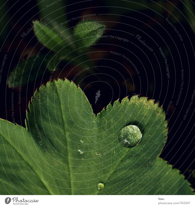 O Nature Plant Drops of water Spring Leaf Fresh Wet Green Black Colour photo Multicoloured Exterior shot Detail Macro (Extreme close-up) Deserted Copy Space top
