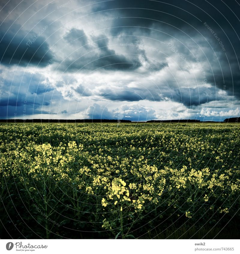 power plant Environment Nature Landscape Plant Storm clouds Horizon Weather Bad weather Wind Agricultural crop Canola field Oilseed rape cultivation