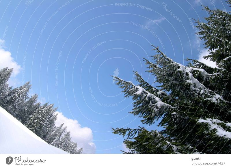 Winter Panorama Austria Fir tree Forest Tree Mountain Snow Ski run