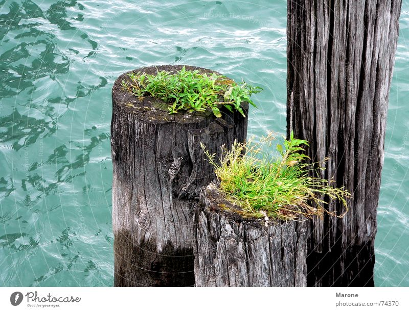 Dalben in the lake Lake Waves Green Wood Foliage plant Grass Mooring post Symbiosis Water Transience Blue Part Nature Life Lake Constance