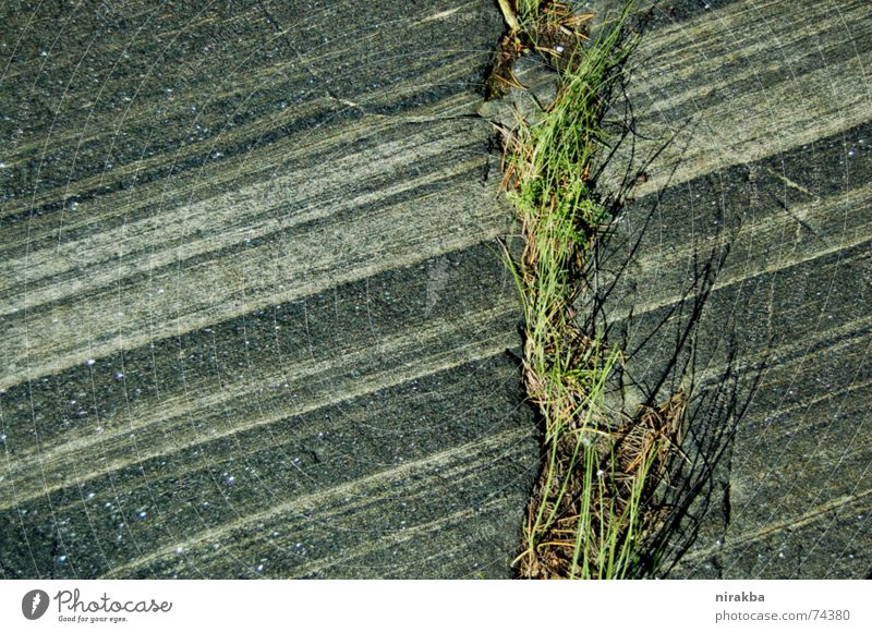 Green Grass Gray Stone Line Rock Stripe
