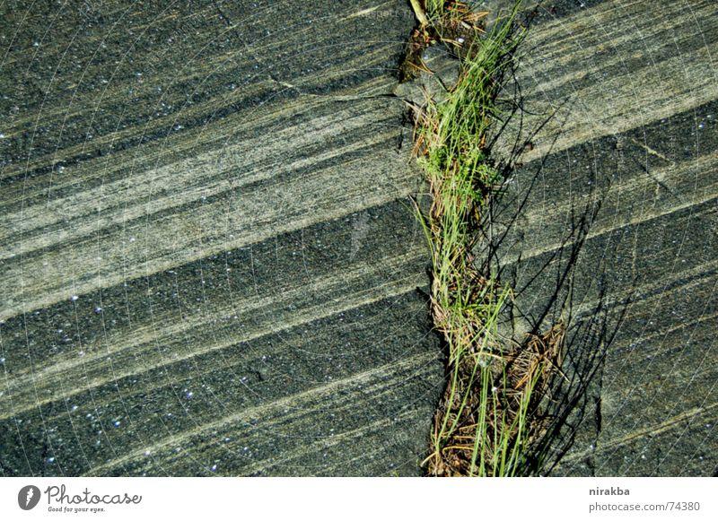 straight lines Grass Gray Green Stripe Stone Rock Line