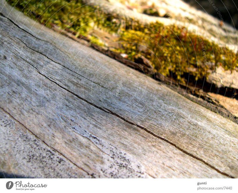 Dead tree trunk with moss Tree Stalk Tree trunk Death Green Gray