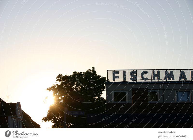 Fischma in the evening Fish market Back-light Sunset Sunlight Summer Markets Kiel Beautiful weather Sky Peaceful Calm