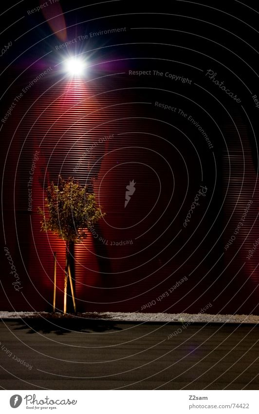 Tree Green Red Lamp Dark Wall (building) Stone Lantern Left Tin Tar Awareness