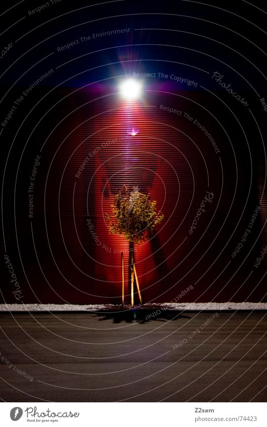 enlightenment II Tree Light Wall (building) Awareness Red Pattern Tin Tar Left Lamp Lantern Dark Night Green Shadow Evening leaves Stone