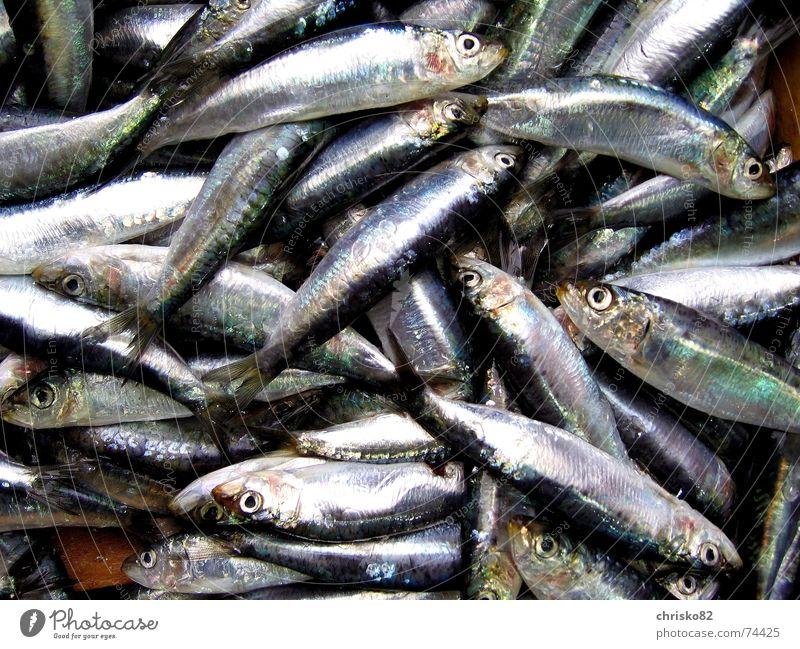 Ocean Death Fish Stand Odor Markets Barn Sardine Malodorous