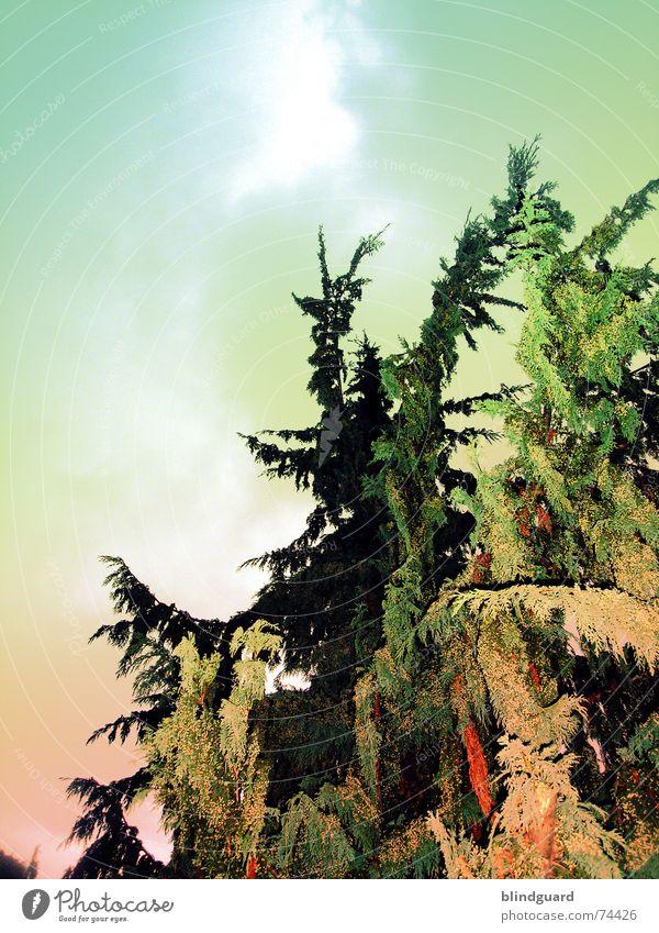 Agent Orange Tree Green Poisoned Sky Upward Tall Down up Above Garden Chemistry inhospitably pesticidal