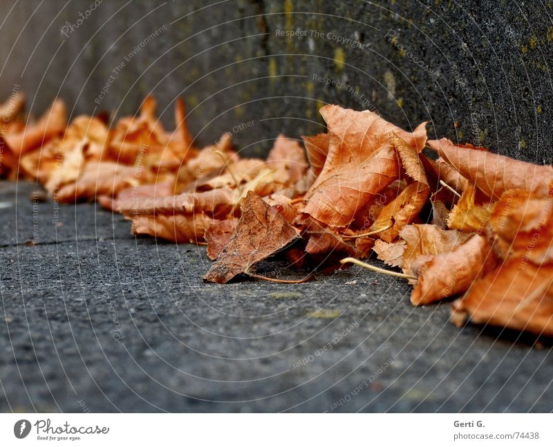 Leaf Winter Cold Warmth Autumn Stone Together Orange Stairs Corner Transience Seasons Dry Stalk Autumn leaves Autumnal