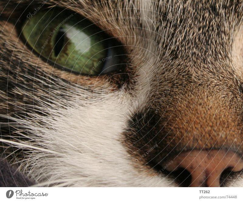 Eyes Hair and hairstyles Cat Near Trust Pelt Domestic cat Cat eyes