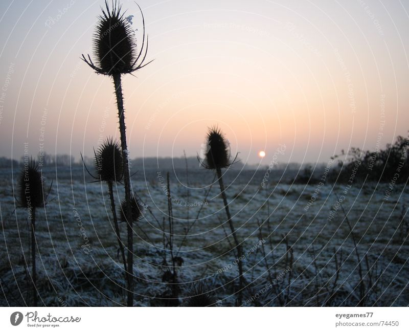 winter set Winter Sunset Thistle Cold Ice Frost Evening walk