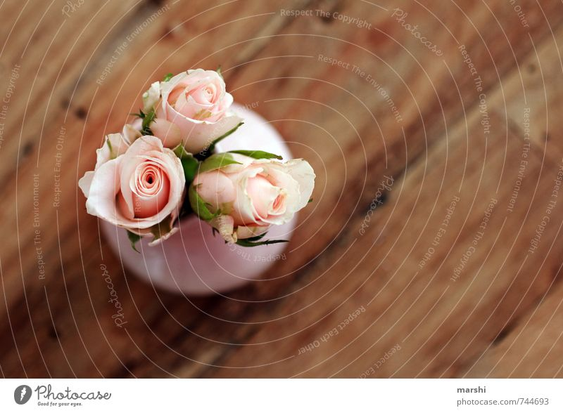 Nature Plant Beautiful Flower Joy Love Emotions Happy Small Moody Together Friendship Gift Romance Rose Fragrance
