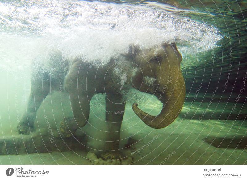 Underwater photo Water Green Summer Joy Animal Swimming & Bathing Exceptional Wet Uniqueness Dive Deep Zoo Leipzig Blow Mammal