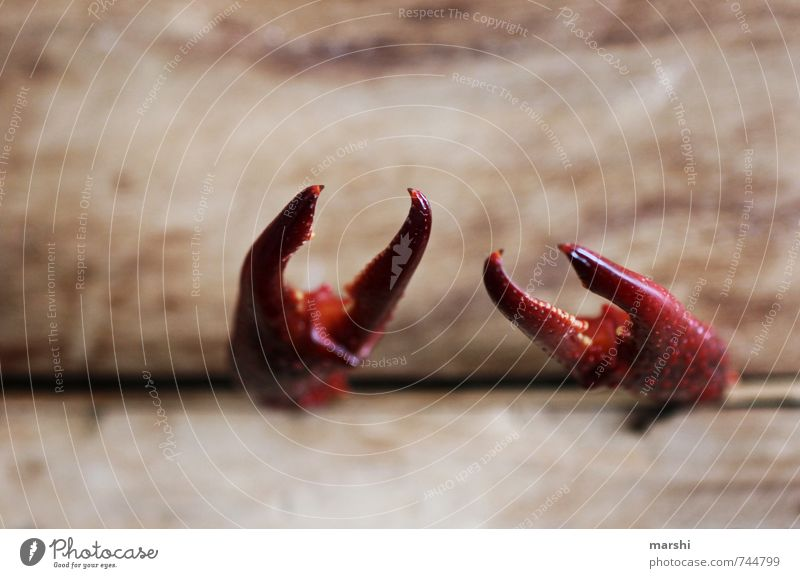 uptight Environment Animal 1 Emotions Shrimp Cancer Crawfish Pair of pliers Biased Wooden board Cramped Threat Pinch Claw Colour photo Close-up Detail
