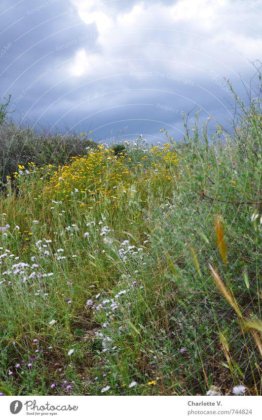 Sky Nature Blue Green Plant Summer Flower Dark Yellow Meadow Grass Gray Natural Moody Pink Illuminate