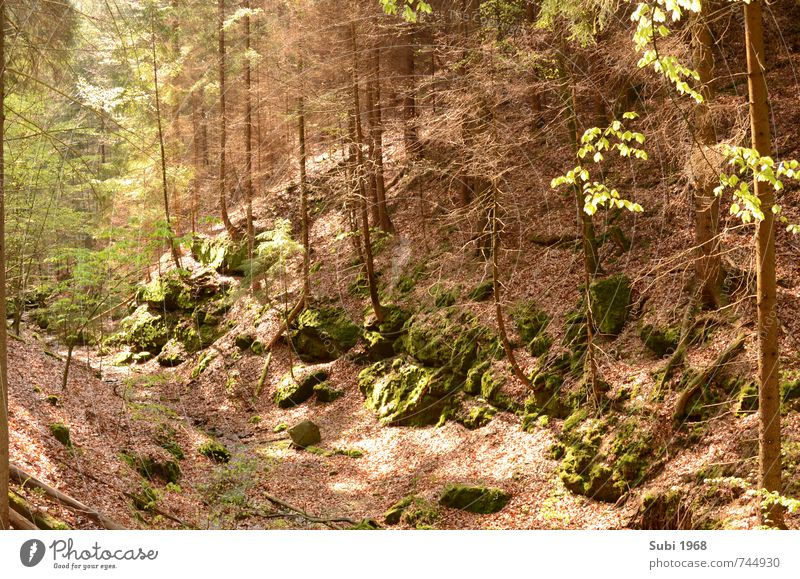 Forest,dreams,spring Nature Landscape Spring Beautiful weather Tree Rock Stone Wood Brown Green Colour photo Exterior shot Deserted Day Deep depth of field