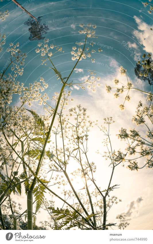 Sky Nature Blue White Plant Summer Sun Flower Environment Meadow Spring Blossom Natural Idyll Growth Bushes