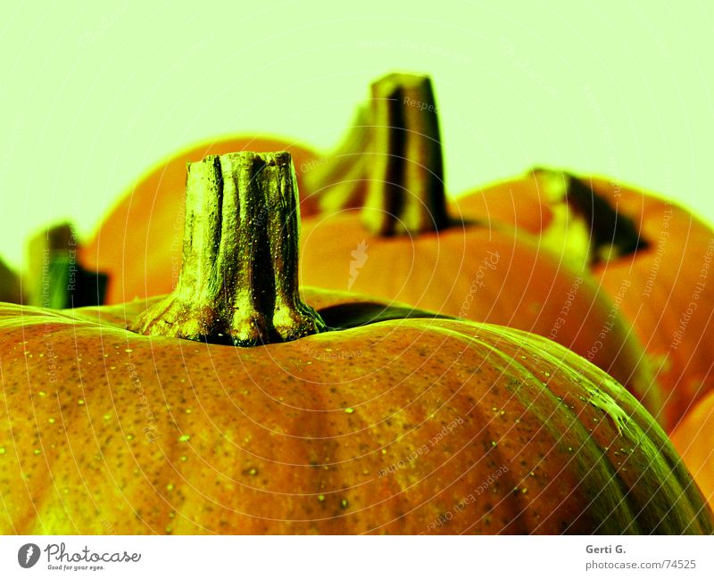 cut Stripe Bulb Stalk Pumpkin time Hallowe'en Pumpkin soup Thanksgiving Vegetable soup Vegetarian diet Hard Fat greenish Structures and shapes background blur