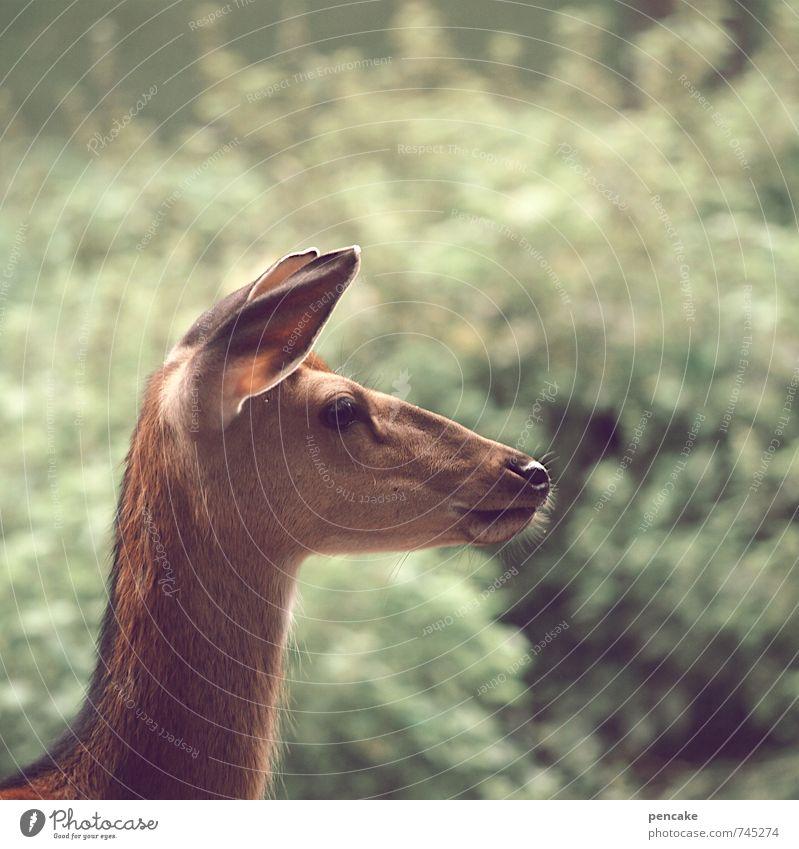 Nature Summer Animal Warmth Feminine Spring Wild animal Bushes Esthetic Observe Future Idea Soft Sign Pure Ear