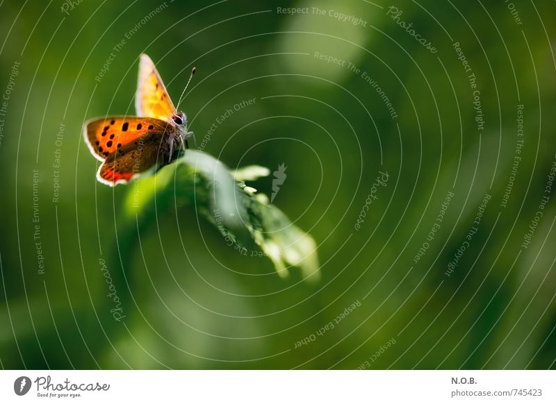 In the light of the butterfly Nature Animal Spring Beautiful weather Grass Garden Park Meadow Field Wild animal Butterfly 1 Esthetic Free Green Orange Trust