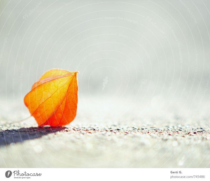 Nature Loneliness Yellow Emotions Small Natural Bright Lie Orange Elegant Illuminate Individual Fresh Point Simple Near