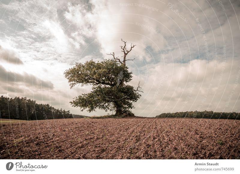 1000 year old oak Summer Nature Landscape Earth Sky Horizon Spring Tree Oak tree Field Old Esthetic Authentic Large Moody Wisdom Inspiration Environment Europe