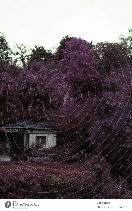 Nature Old Tree House (Residential Structure) Colour Autumn Free Broken Violet Derelict Hat Wild animal Hut Unwavering Collage Reworked