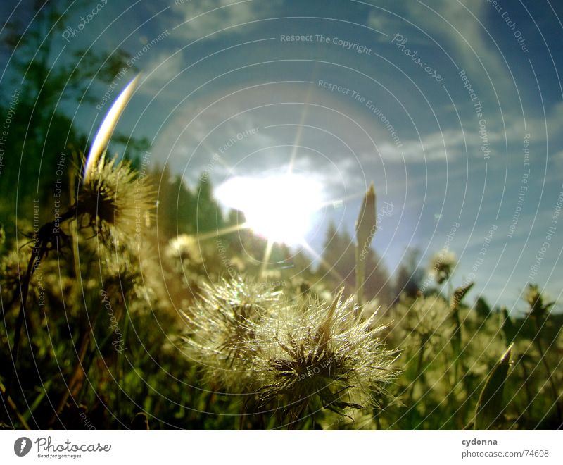 Fully dazzled Sunbeam Radiation Dazzle Worm's-eye view Meadow Hill Summer Grass Clouds Beautiful Idyll Untouched Physics Action Green