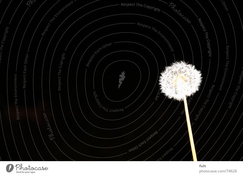 White Calm Black Wind Flying Dandelion Blow Dynamics Swing