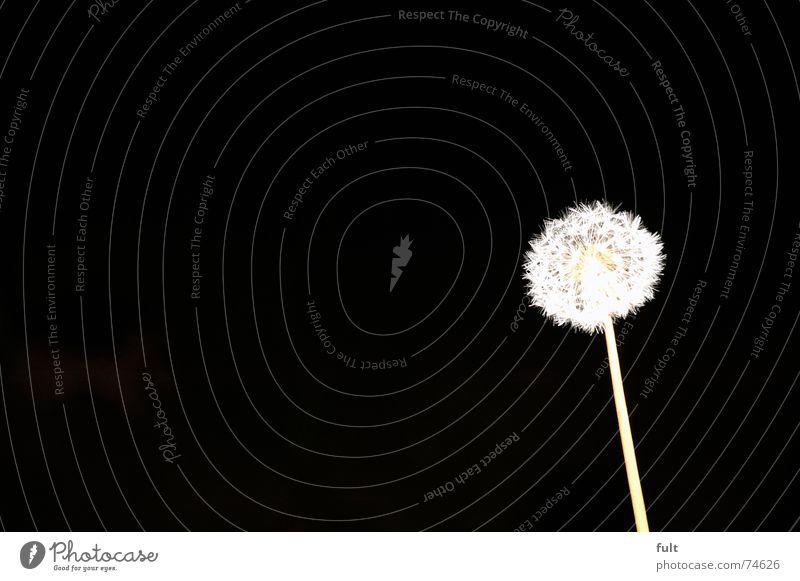 White Calm Black Wind Flying Dandelion Blow Dynamics Swing