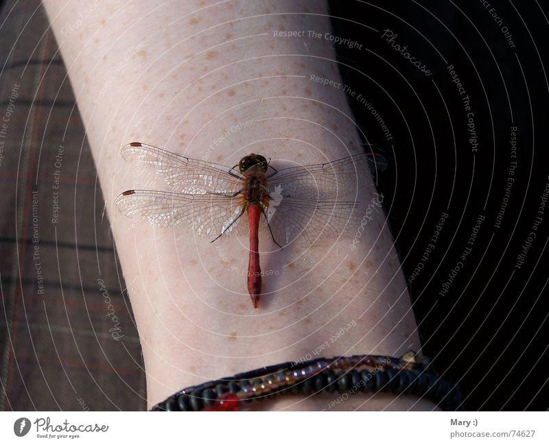 Human being Nature Animal Autumn Arm Break Sunbathing Dragonfly