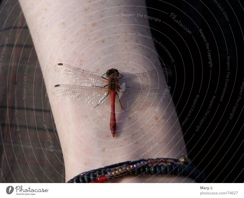 Sunbathing in October Dragonfly Autumn Animal Break Arm Be confident Nature Human being