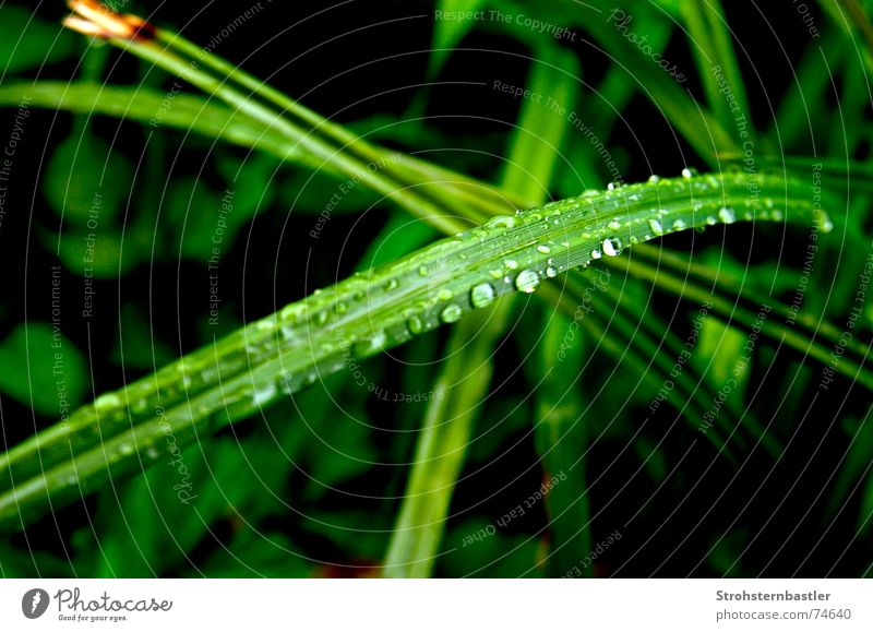 Nature Water Flower Green Plant Grass Rain Drops of water Great Foliage plant