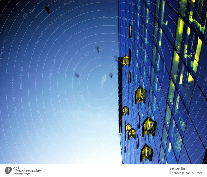 evening birds Potsdamer Platz Facade Window Ventilation flap Light Bird Crow Sleeping place Blue Worm's-eye view Evening Sky Berlin Flying sleeping tree