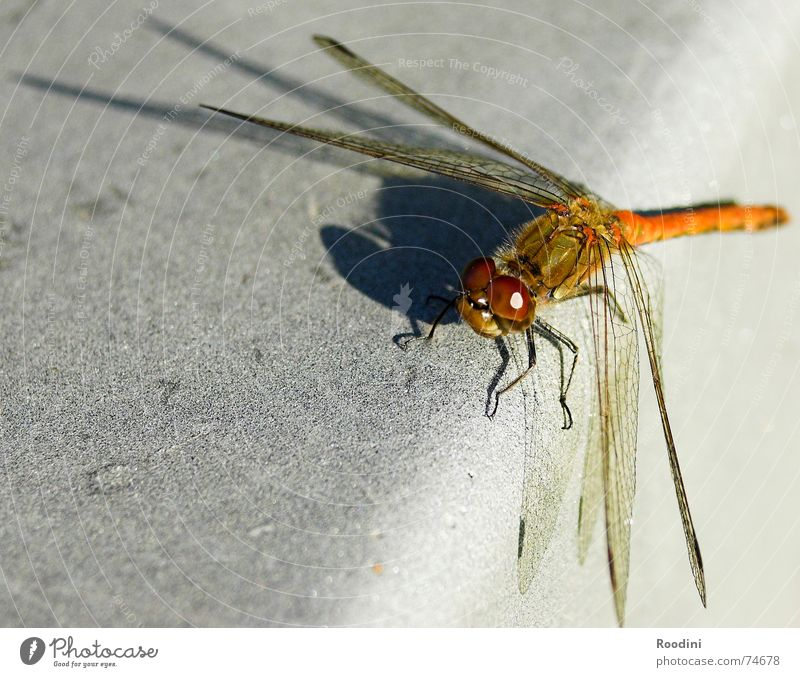 Nature Animal Perspective Wing Insect Feeler Dragonfly Compound eye Goggle eyes Flying insect Bright background