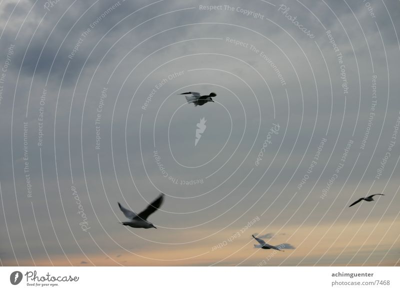 unattached Bird Hope Seagull Ocean Lake Freedom Sky Evening romatics