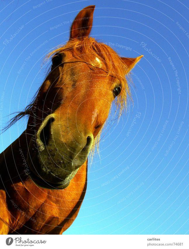 WaSgUcKStDu Meddlesome Horse Mane Nostrils Whinny Veterinarian Curiosity Funny Diagonal ears sharpened Muzzle Crazy Tilt