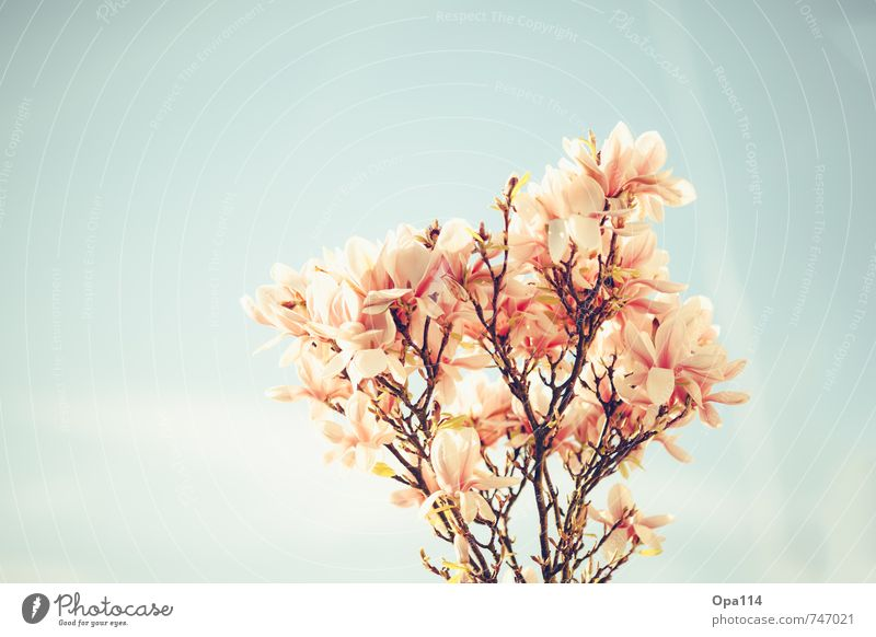 Sky Nature Blue Beautiful Plant Tree Red Leaf Animal Environment Spring Blossom Garden Pink Park Growth