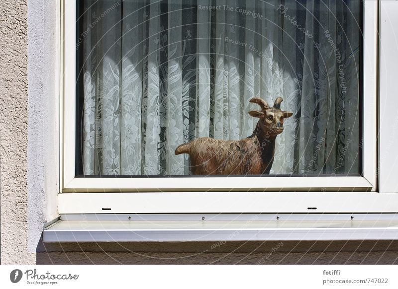 Relaxation Animal Window Living or residing Crazy Esthetic Creepy Whimsical Figure Curtain False Hideous Love of animals Goats Staid Acceptance