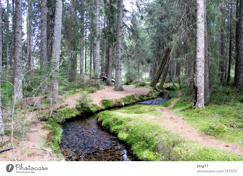 forest brook Nature Plant Earth Water Spring Tree Forest Brook River Inspiration Climate Colour photo Exterior shot Deserted Day
