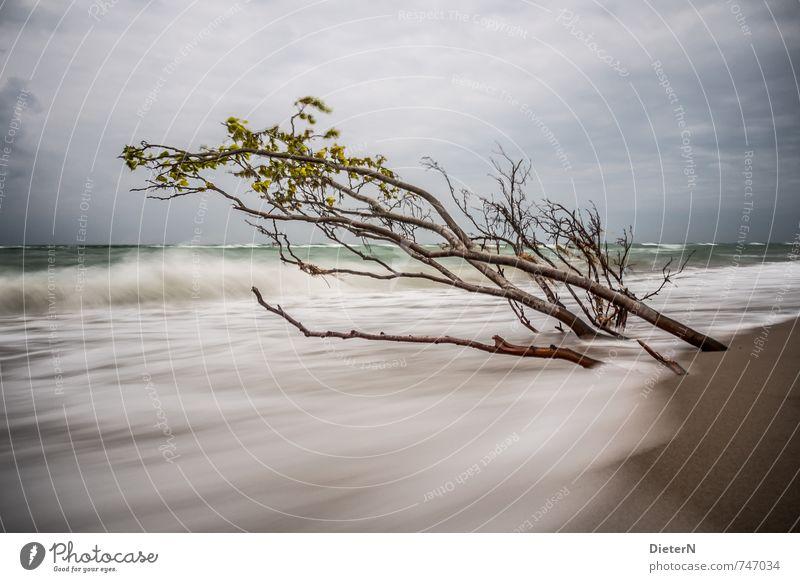 spring Beach Ocean Waves Sand Water Clouds Horizon Tree Coast Baltic Sea Blue Brown White Darss Western Beach Long exposure Colour photo Deserted Copy Space top